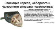 Эволюция черепа жаберного и челюстного аппарата позвоночных Крыша
