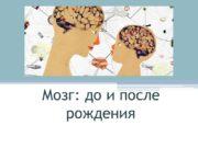 Мозг: до и после рождения Рефлекторная функция спинного