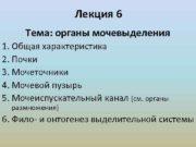 Лекция 6 Тема органы мочевыделения 1 Общая характеристика