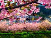 Нитка маршрута Москва-Токио-Киото-Осака-Токио-Москва Тематика маршрута Познавательный туризм Общая