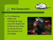 Rat Dissection l The following slides are intended