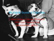 История Белки и Стрелки Собаки Белка и Стрелка