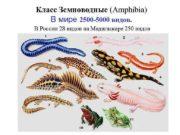 Класс Земноводные Amphibia В мире 2500 -5000 видов