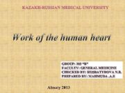 Work of the human heart GROUP 203 B