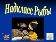 надкласс Рыбы класс Костные класс рыбы Хрящевые рыбы