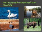 РАСТИТЕЛЬНЫЙ И ЖИВОТНЫЙ МИР БЕЛАРУСИ Природные ресурсы