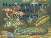 Многощетинковые черви Polychaeta Подготовила студентка ӏӏ курса 36