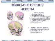 ФИЛО-ОНТОГЕНЕЗ ЧЕРЕПА План лекции 1 Отделы черепа