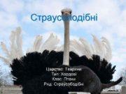 Страусоподібні Царство Тварини Тип Хордові Клас Птахи Ряд