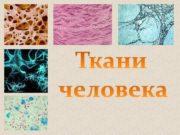 СЛОВАРЬ Ткань это группа клеток и межклеточное