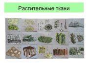 Растительные ткани Группа клеток сходных по строению