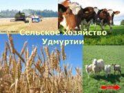 Фото a-iskra ru Сельское хозяйство Удмуртии Фото animalbreeding