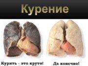 Табак как однолетнее так и