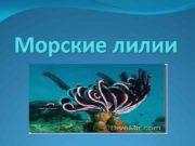 Морские лилии Морские лилии лат Crinoidea