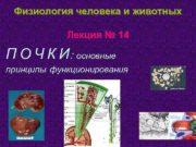 Физиология человека и животных Лекция 14 П