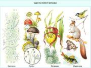Бактерии одноклеточные организмы Самые древние живые организмы