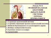 Лекция 11 ФУНКЦИОНАЛЬНАЯ АНАТОМИЯ ДЫХАТЕЛЬНОЙ СИСТЕМЫ SYSTEMA