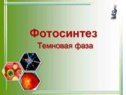 Фотосинтез Темновая фаза Световая фаза фотосинтеза Процессы