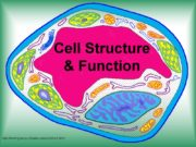 Cell Structure & Function http://koning.ecsu.ctstateu.edu/cell/cell.html Cell Theory All
