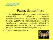 1  рід Alphabaculovirus  – нуклеополіедровірус
