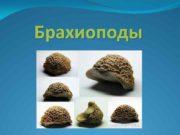 Брахиоподы Название группы ископаемых животных брахиоподы