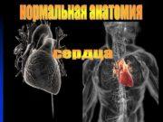 СЕРДЦЕ Нормальная анатомия сердца n Сердце —