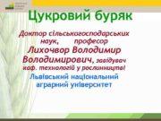 Цукровий буряк Доктор сільськогосподарських наук професор Лихочвор Володимирович