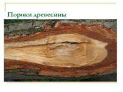 Пороки древесины Пороки древесины отклонения строения древесины