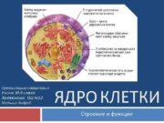 Презентацию подготовил Ученик 10 -Б класса Запорожской ОШ
