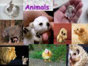 Animals Animals as pets