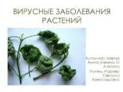 ВИРУСНЫЕ ЗАБОЛЕВАНИЯ РАСТЕНИЙ Выполнила Боярчук Алина ученица 10