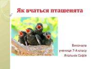 Як вчаться пташенята Виконала учениця 7 -А класу