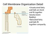 Cell Membrane Organization Detail Unsaturated fatty acid