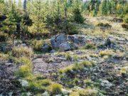 Почвоведение — наука о почвах их строении составе