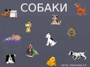 СОБАКИ автор : Берюхова Е. К.  Собаки