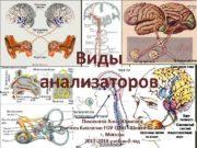 Виды анализаторов Пименова Анна Юрьевна Учитель биологии ГОУ