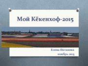 Мой Кёкенхоф-2015 Елена Потапова ноябрь 2015 18