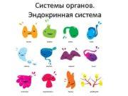Системы органов Эндокринная система Железы внутренней секреции