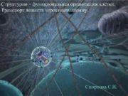 Структурно функциональная организация клетки Транспорт веществ через