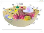 1 11 Лигазы лиазы фибриллярные белки 12