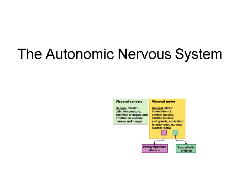 compare and contrast autonomic and somatic nervous system