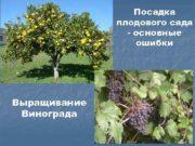 Посадка плодового сада — основные ошибки Выращивание Винограда