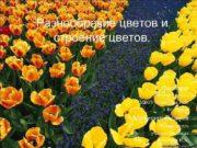 Разнообразие цветов и строение цветов Выполнила ученица 7