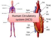 Human Circulatory system HCS Circulatory system