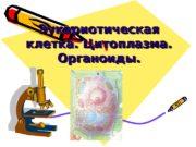 Эукариотическая клетка. Цитоплазма.  Органоиды. Эукариотическая клетка. Цитоплазма.