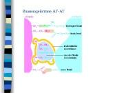 Презентация АГ-АТ