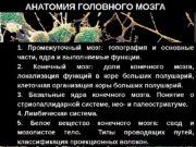 1. 1.   Промежуточный мозг:  топография