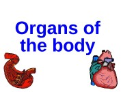 Organs of the body  brain  heart