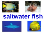 saltwater fish  shark  whale shark