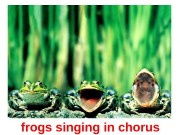 frogs singin g in chorus  mouse in